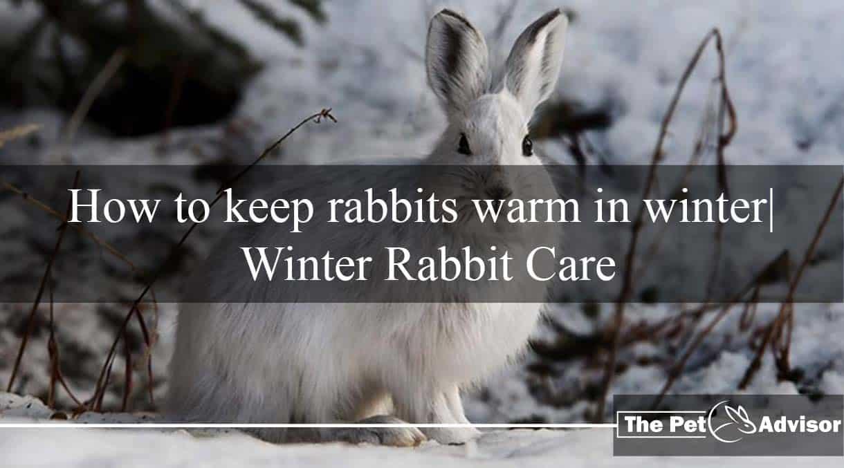 Winter Rabbit Care