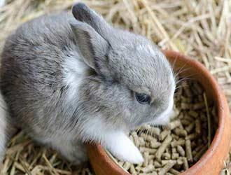 bunny diet at 3 weeks