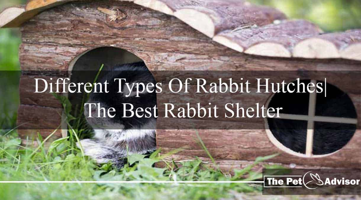 Types Of Rabbit Hutches