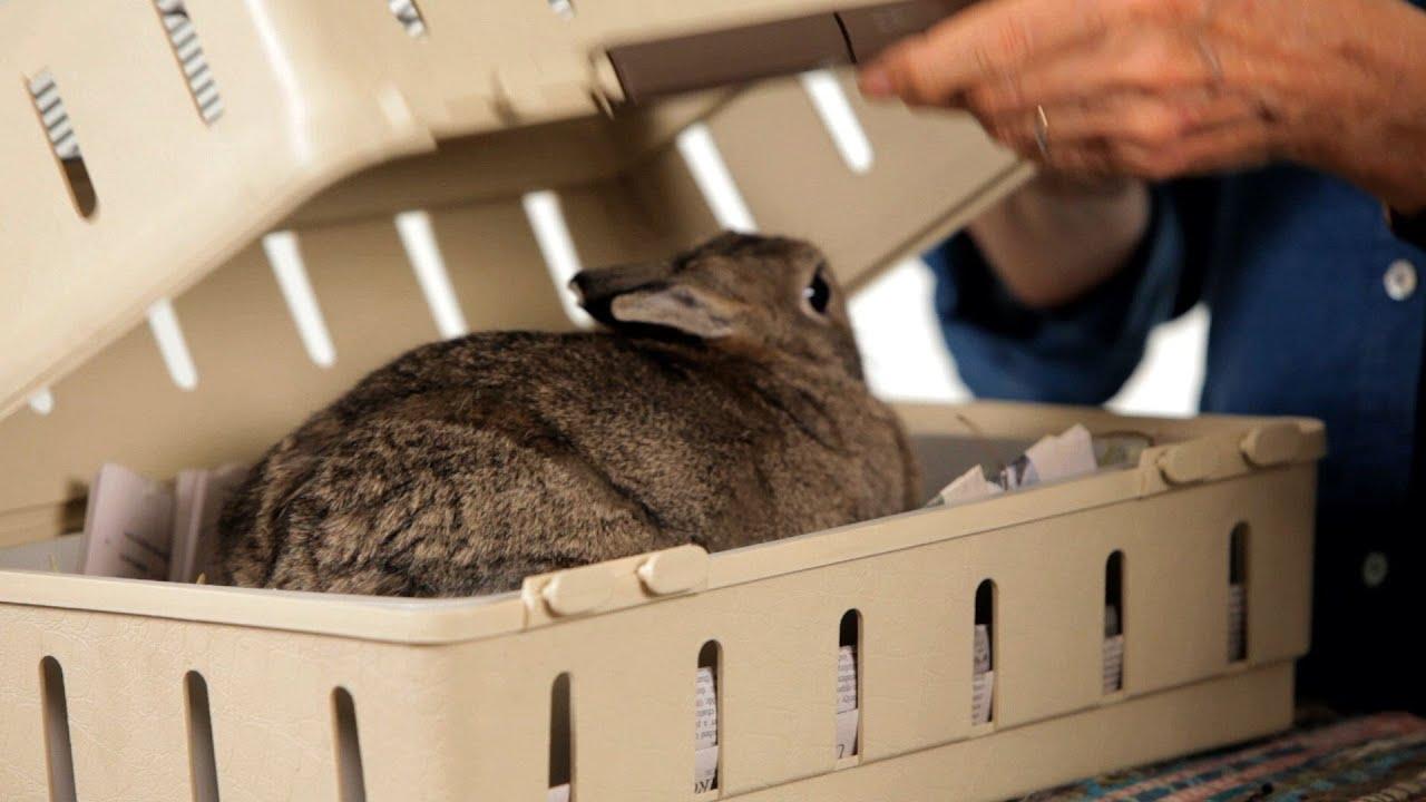 Best Rabbit Career