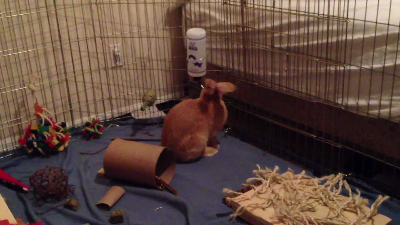 Best Rabbit Water Bottle