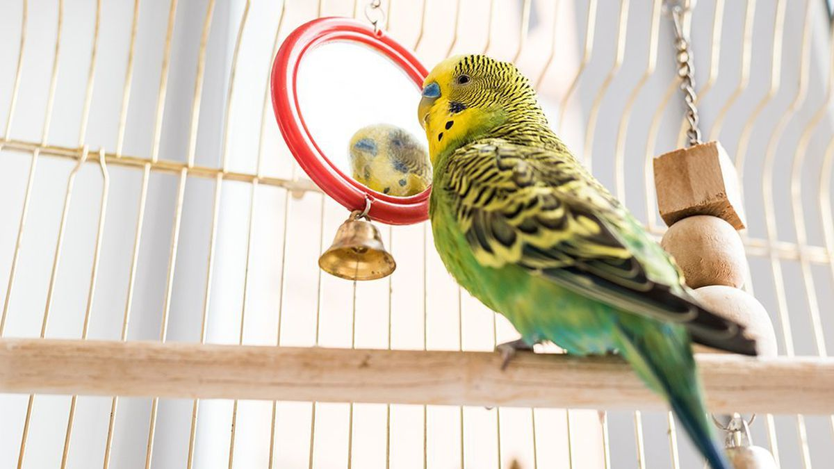 best Parakeet Cage in 2020