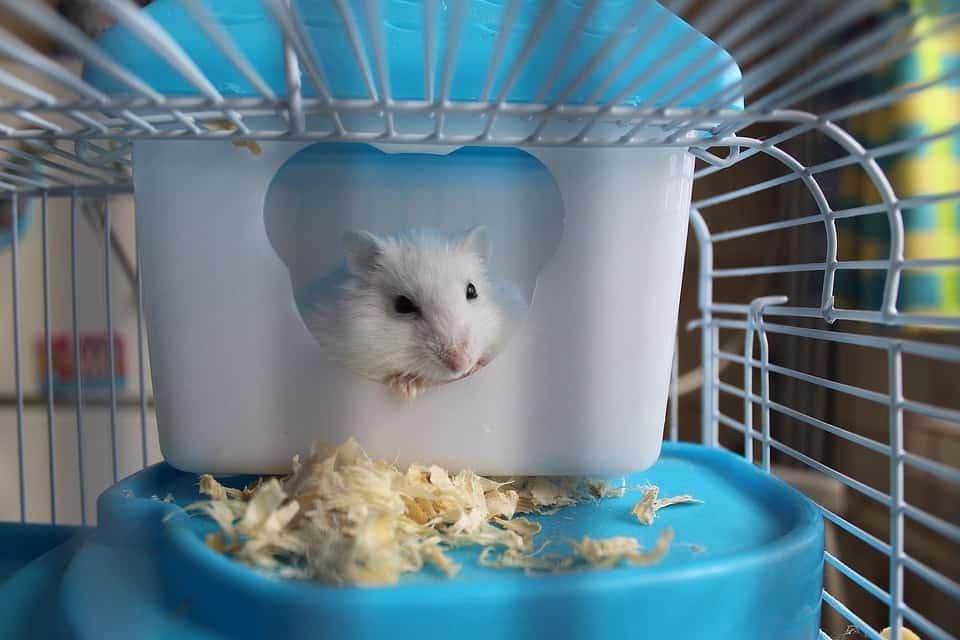 Best hamster cage 2020