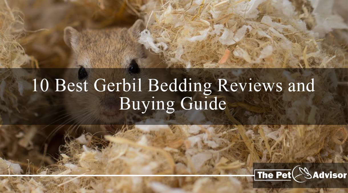 Best Gerbil bedding