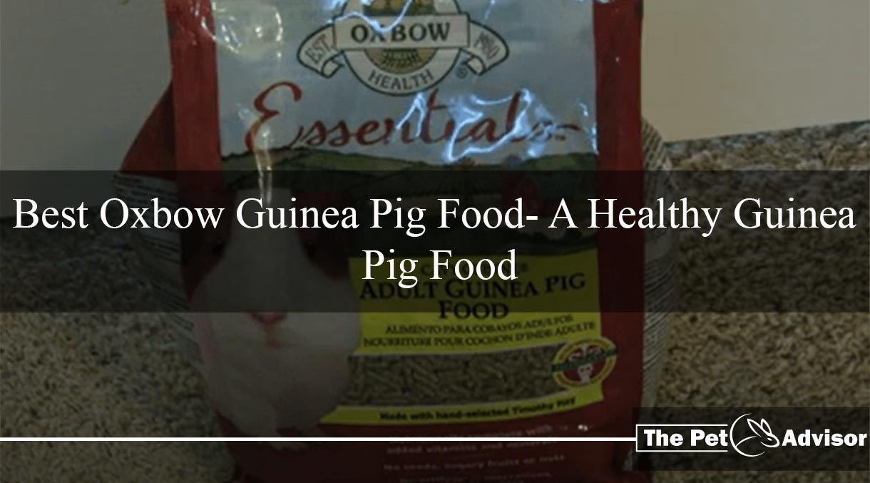 Oxbow Guinea Pig Food