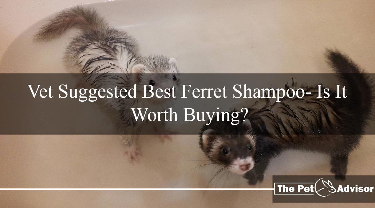 best ferret shampoo