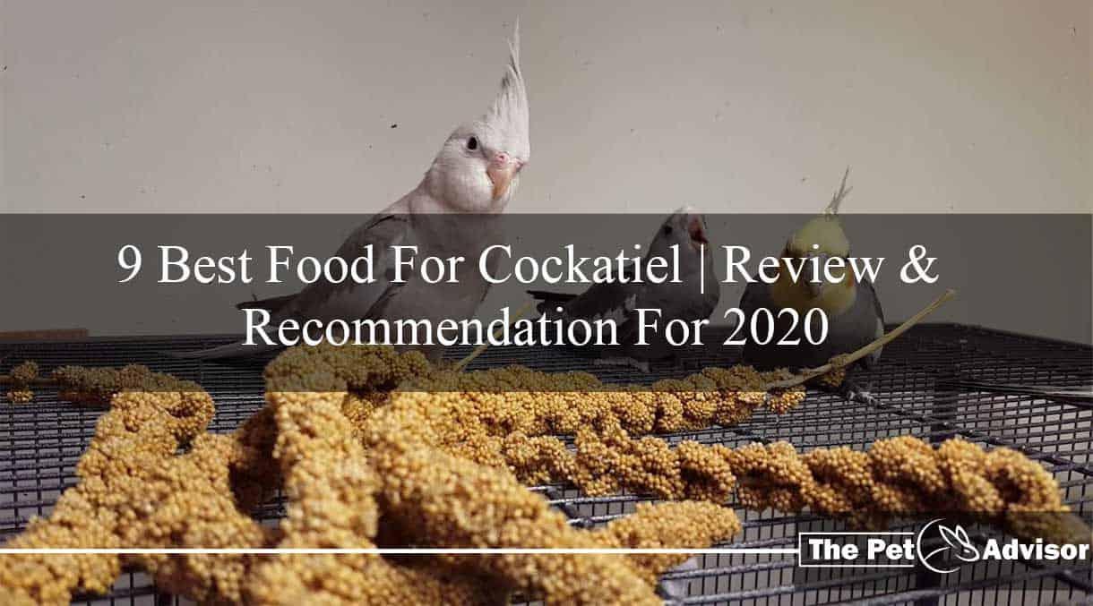 Best food for Cockatiel