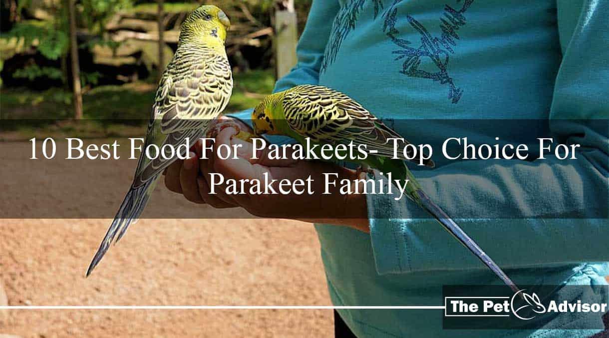 best food for parakeet