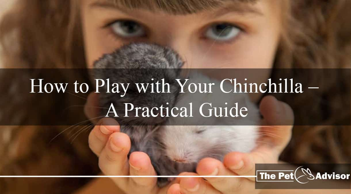 How to Play with Your Chinchilla