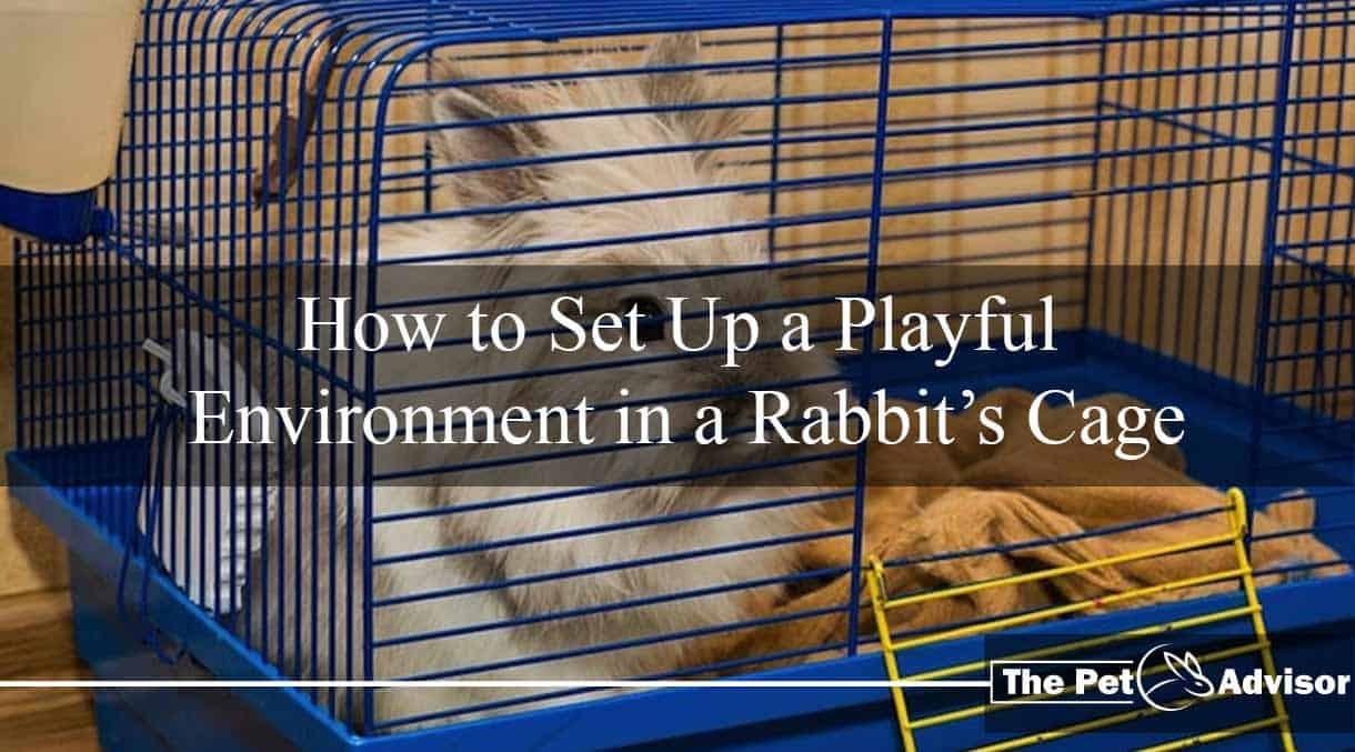 Rabbit cage ideas