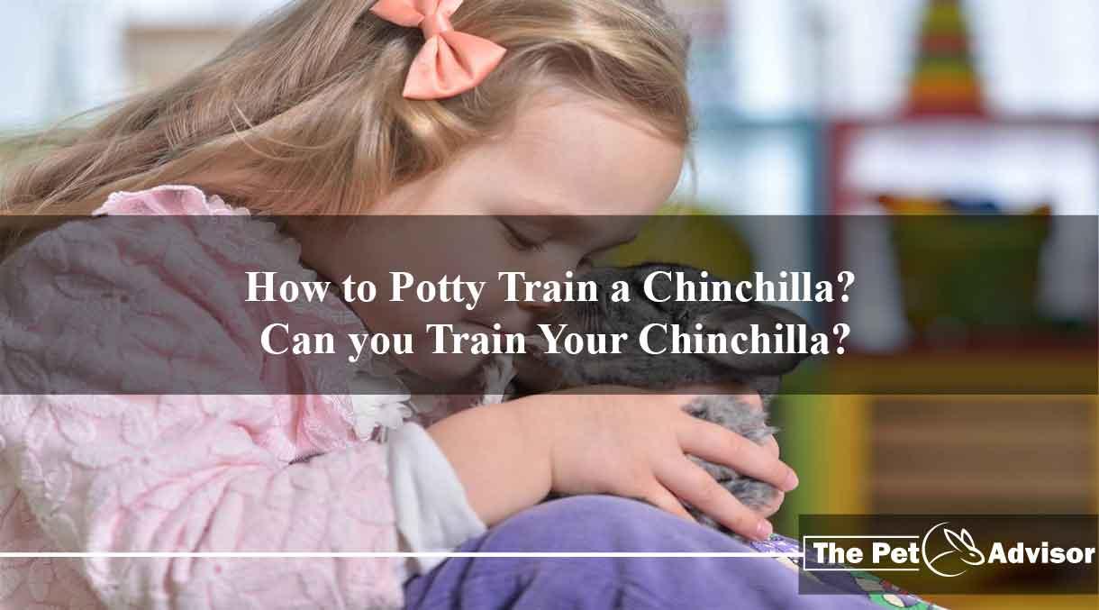 How-to-Potty-Train-a-Chinchilla