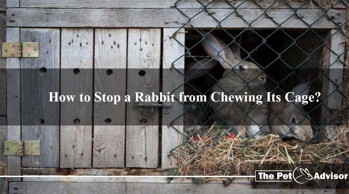 How to Stop a Rabbit from Chewing Its Cage