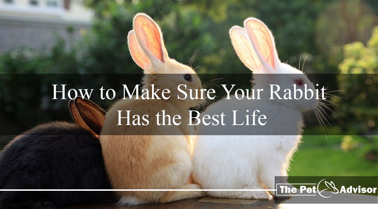 how to make your rabbit happy