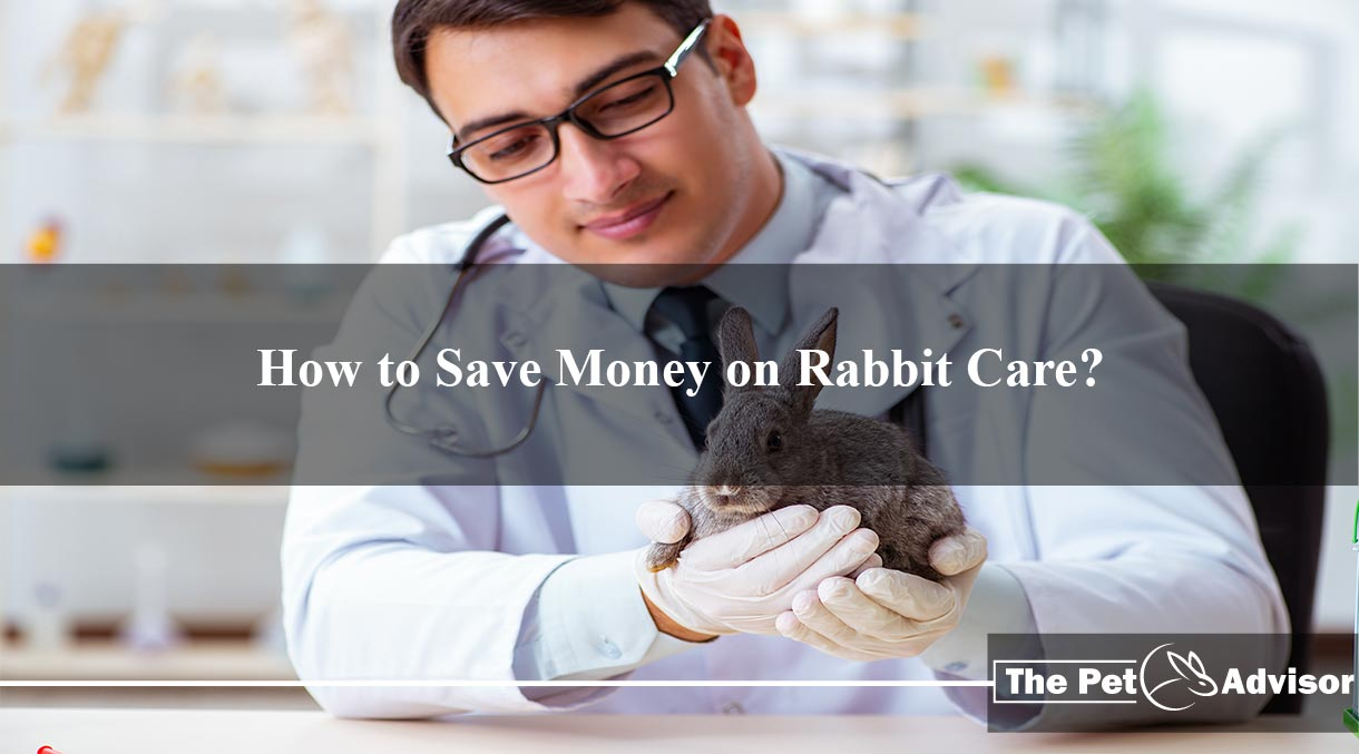 How to Save Money on Rabbit Care