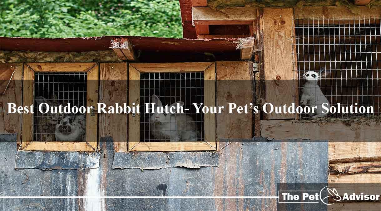 Best-Outdoor-Rabbit-Hutch