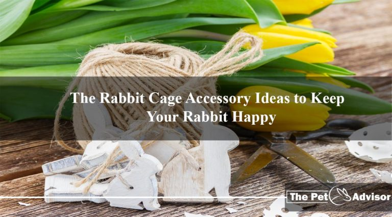 The Rabbit Cage Accessory Ideas to Keep Your Rabbit Happy