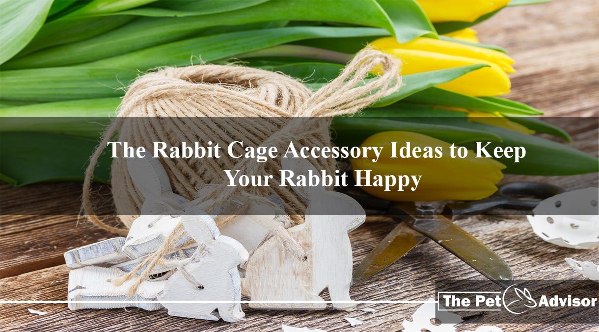 Rabbit Cage Accessory Ideas