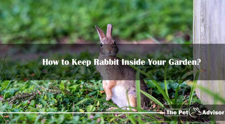 How to Keep Rabbit Inside Your Garden?
