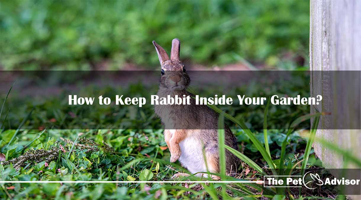 How to Keep Rabbit Inside Your Garden