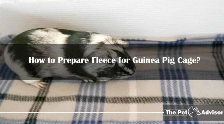 How to Prepare Fleece for Guinea Pig Cage?