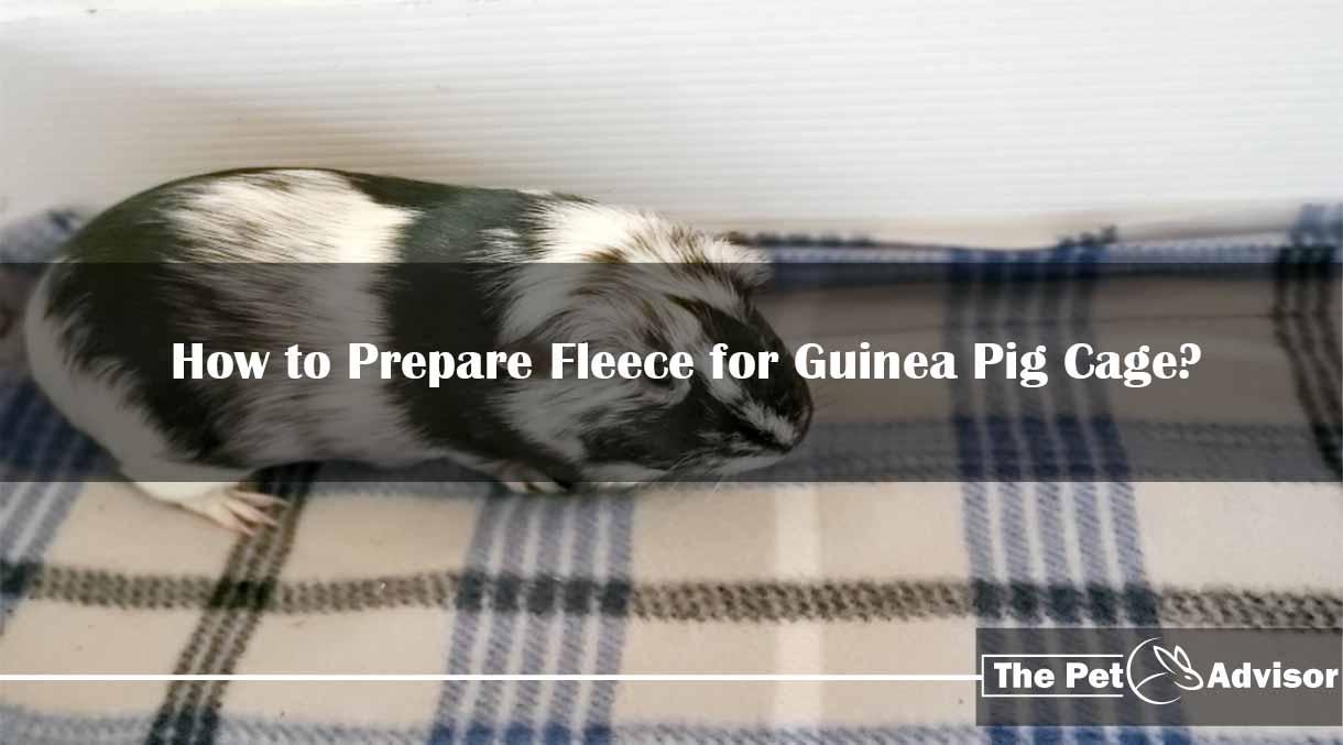 How to Prepare Fleece for Guinea Pig Cage