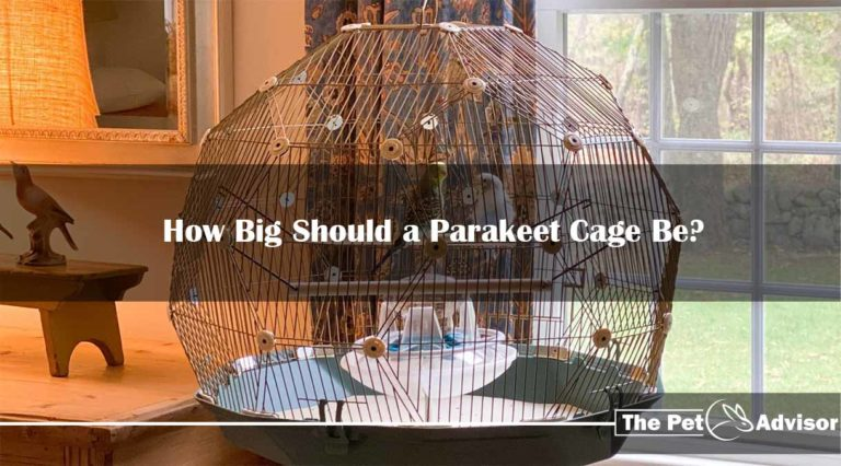How Big Should a Parakeet Cage Be? Cage size and Bar Spacing
